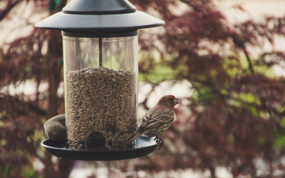 Wat is goed vogelvoer?